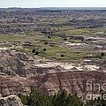 Wild Mountain Goat On Top Of The Badlands by Living Color Photography Lorraine Lynch