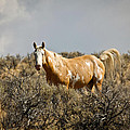 Wild Oregon Horse by Steve McKinzie