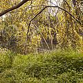 Wild Park by Daniel Blatt
