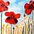 Wild Poppies by Valerie Ornstein
