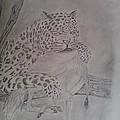 Wild Predator by Aniq Urrahman