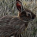 Wild Rabbit by Maciek Froncisz