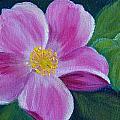 Wild Rose Study 6 by Dee Carpenter