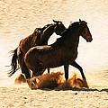 Wild Stallion Clash 3 by Alistair Lyne