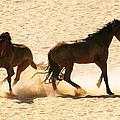 Wild Stallion Clash by Alistair Lyne