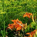 Wild Tiger Lilies 2 by Roger Soule