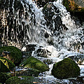 Wild Water by Susan Herber