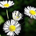 Wildflower 4 by Joe Faherty