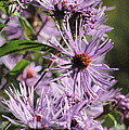 Wildflower Days by Trish Hale