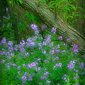 Wildflower Dreams by Cindy Haggerty