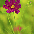 Wildflower by Image by Rebecca Weaver, RWeaverNest Photography