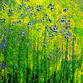 Wildflower Impression By Jrr by First Star Art