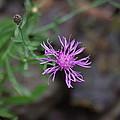 Wildflower by Michelle Burton