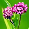 Wildflower  by Paul Ward