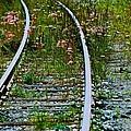 Wildflower Railroad by Eric Tressler