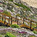 Wildflower Steps by Douglas Barnard