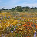 Wildflower Wonderland 8 by Lynn Bauer
