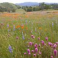 Wildflower Wonderland 6 by Lynn Bauer
