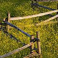 Wildflowers And A Wooden Fence At by David Chapman
