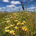 Wildflowers And Barbed Wire by Peter Tellone