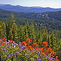 Wildflowers And Mountaintop View by Ellen Thane and Photo Researchers