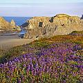 Wildflowers And Rock Formations Along by Craig Tuttle
