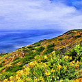 Wildflowers At Point Loma by Dominic Piperata
