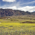 Wildflowers In Death Valley by Endre Balogh