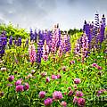 Wildflowers In Newfoundland by Elena Elisseeva