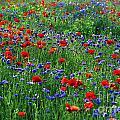 Wildflowers by John Greim