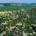 Wildflowers, Near Seaforde, Co Down by The Irish Image Collection