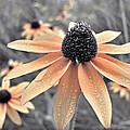 Wildflowers Of Ontario by Miss Dawn