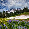 Wildflowers On Mazama Ridge by Photo by David R irons Jr