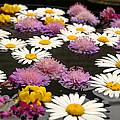 Wildflowers On Water by Emanuel Tanjala