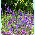 Wildflowers by Paulette B Wright