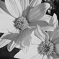 Wildflowers by Rick Rauzi