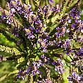Wildflowers Top Down