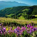 Wildflowers Umbria by Brian Jannsen