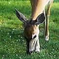 Wildlife Beauty by Janie Johnson