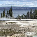 Wildlife In Yellowstone by Living Color Photography Lorraine Lynch