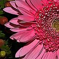 Wildly Pink Mum by Phyllis Denton