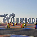 Wildwoods by Bill Cannon