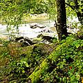 Williams River by Thomas R Fletcher