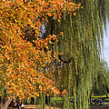 Willow In The Garden by Joann Vitali
