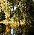 Willow Mirror by LeeAnn McLaneGoetz McLaneGoetzStudioLLCcom