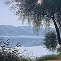 Willow by Oleg Bylgakov