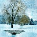 Willow Trees By Stream In Winter by Jill Battaglia