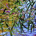 Willows At The Pond by Judi Bagwell