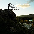 Wind Blown Tree At Many Glacier by Jeff Swan