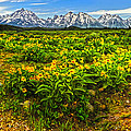 Wind River Range In West Central Wyoming - 03 by Gregory Dyer